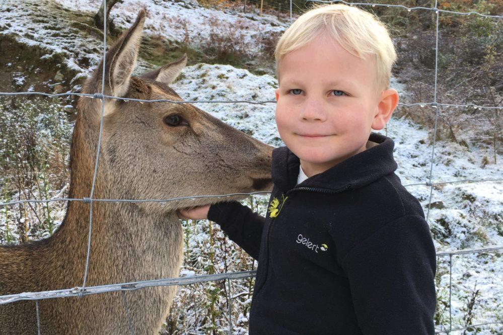 Whitebridge Deer
